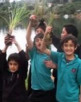 Whangamarino School