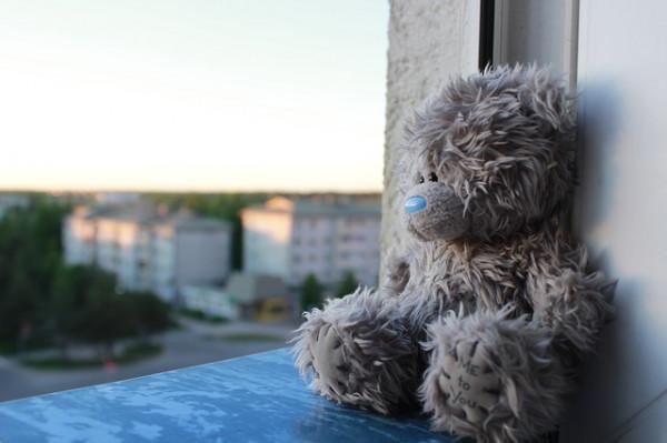 Teddy in a window