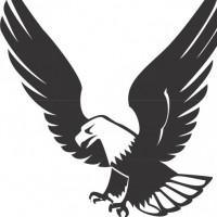 Nixon Eagle