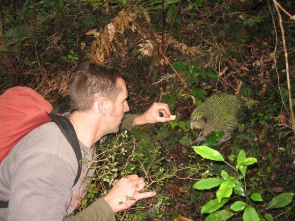 Kakapo Encounter.