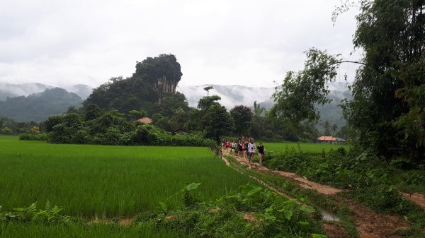 Weekend excursion in Vang Vieng - walking amongst the rice paddies on our way to a guided cave tour